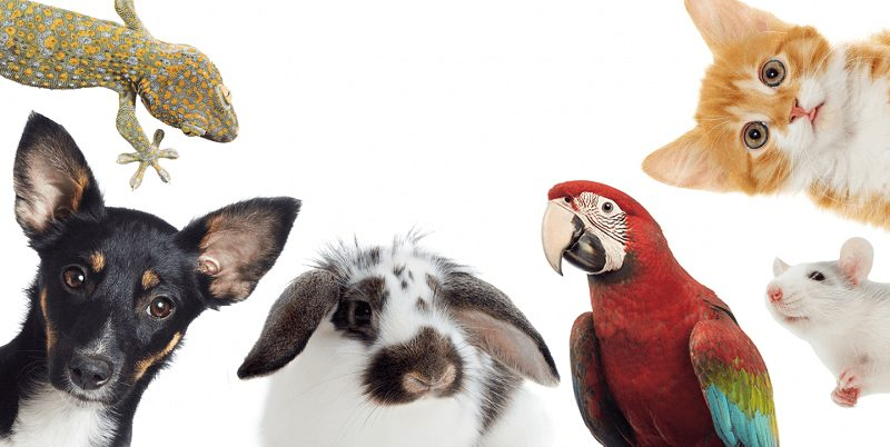 recensamant-animale-de-companie-bucuresti